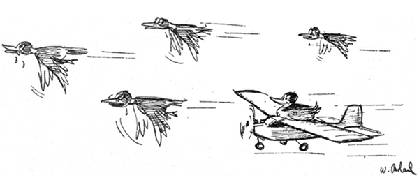 Flying birds and plane 600